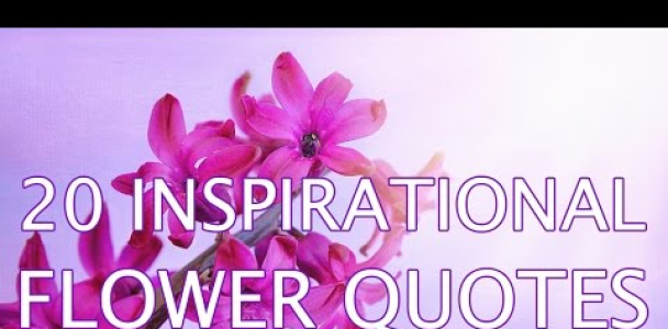Positive quotes series: Inspirational Flower Quotes (slideshow video with beautiful flower photos)